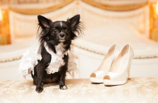 Kvinde gifter sig med sin hund
