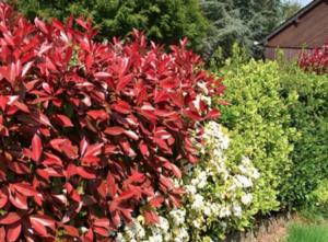 Gode tips til et grønnere og mere bæredygtigt hjem